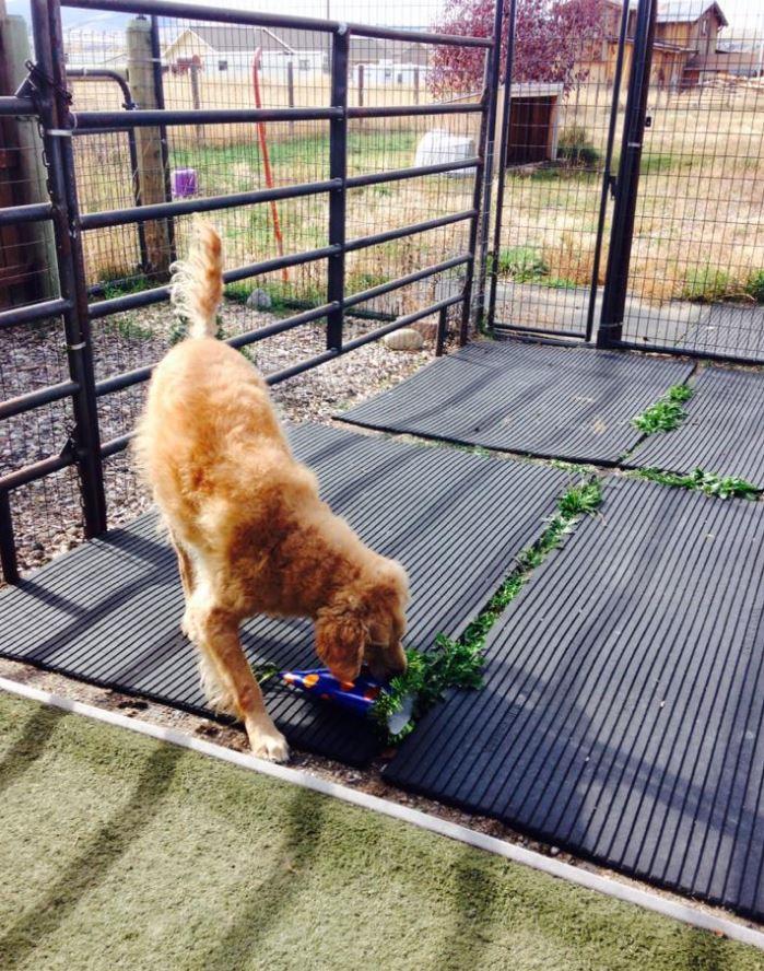 Doggie Daycare & Motel image 4