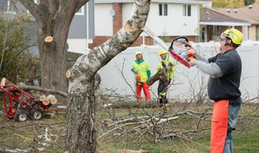 Precise Tree Care Inc image 2
