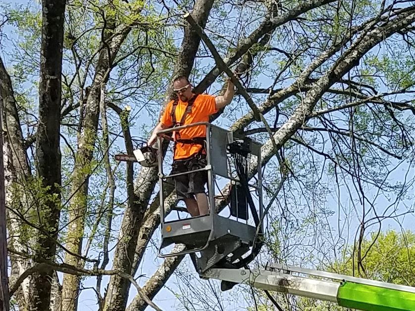 ArborJacks Tree Service image 3