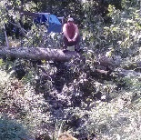 Dunn's Tree Service image 5