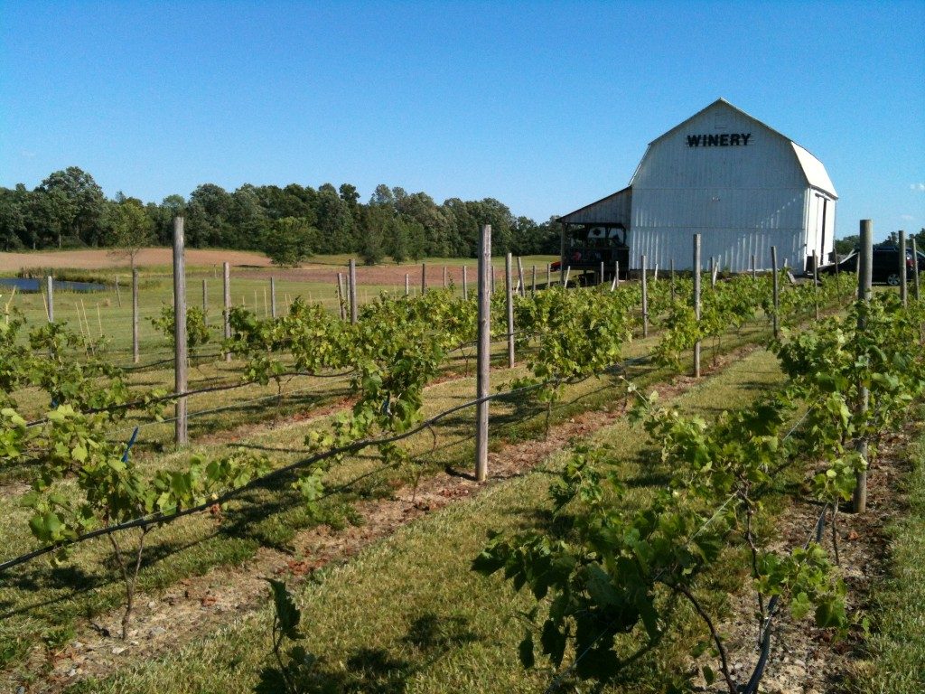 Izzo's White Barn Winery image 5