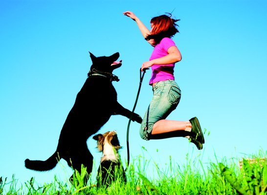Fetch! Pet Care image 2