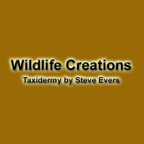 Wildlife Creations Taxidermy image 5