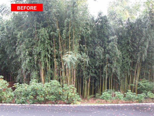 Got Bamboo Inc image 10