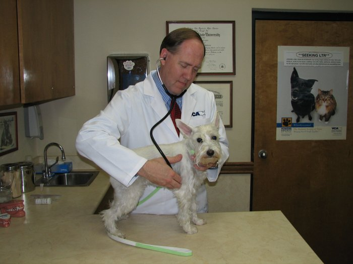 VCA Woodland East Animal Hospital image 3
