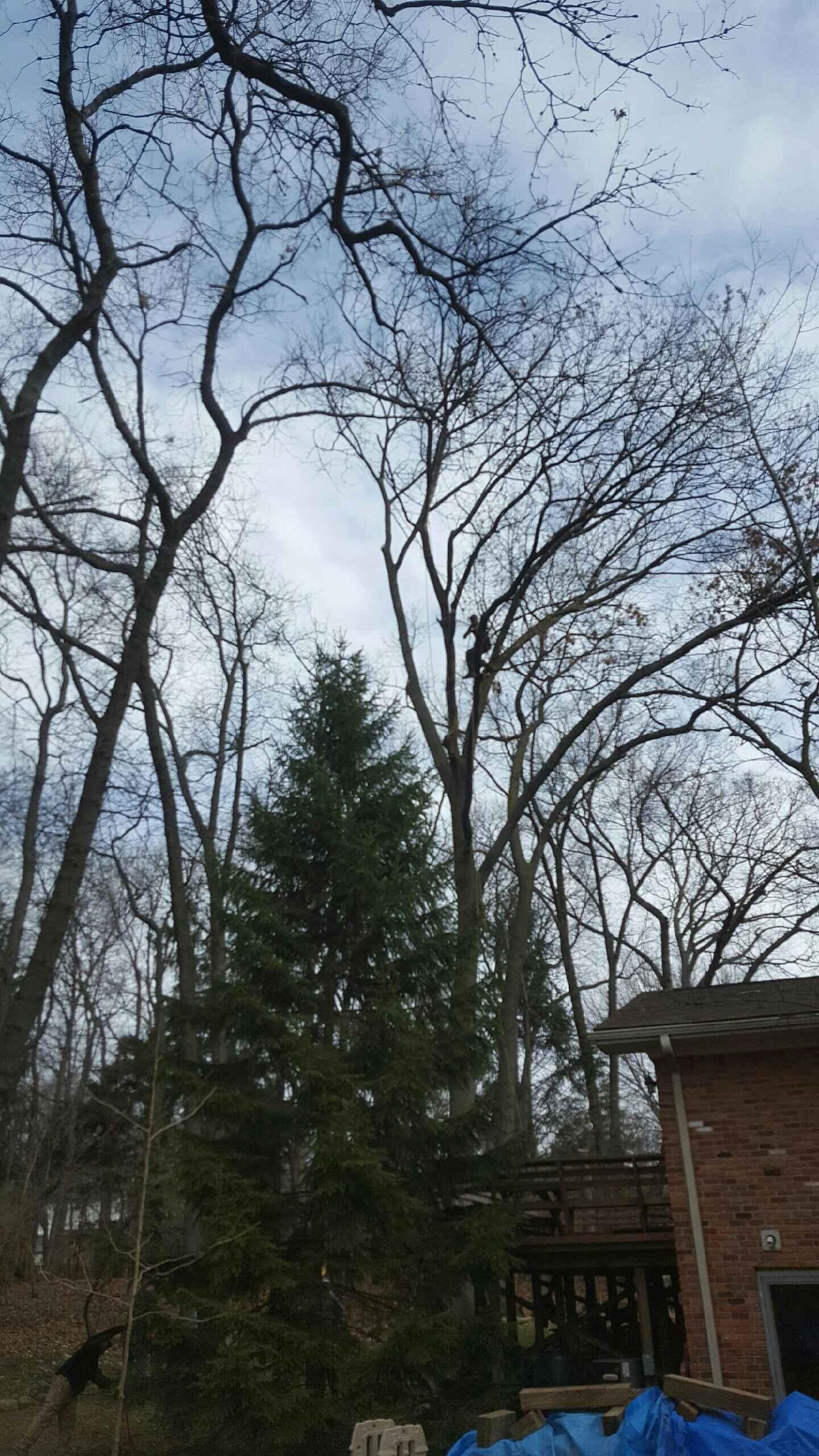 Coffman's Tree Service image 8