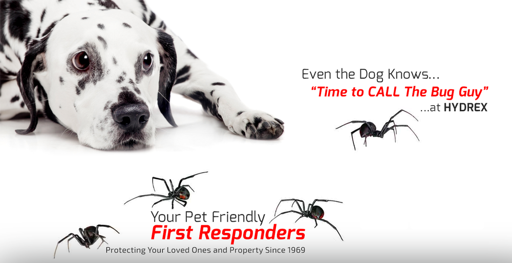 Hydrex Termite & Pest Control image 0
