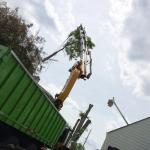 Russ's Tree Service image 4