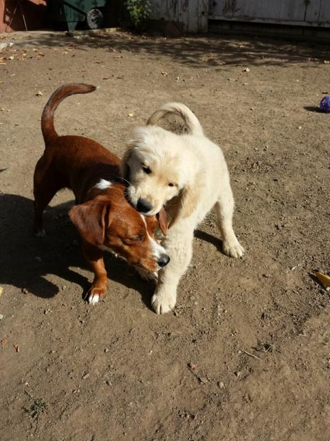 Fetch! Pet Care image 30