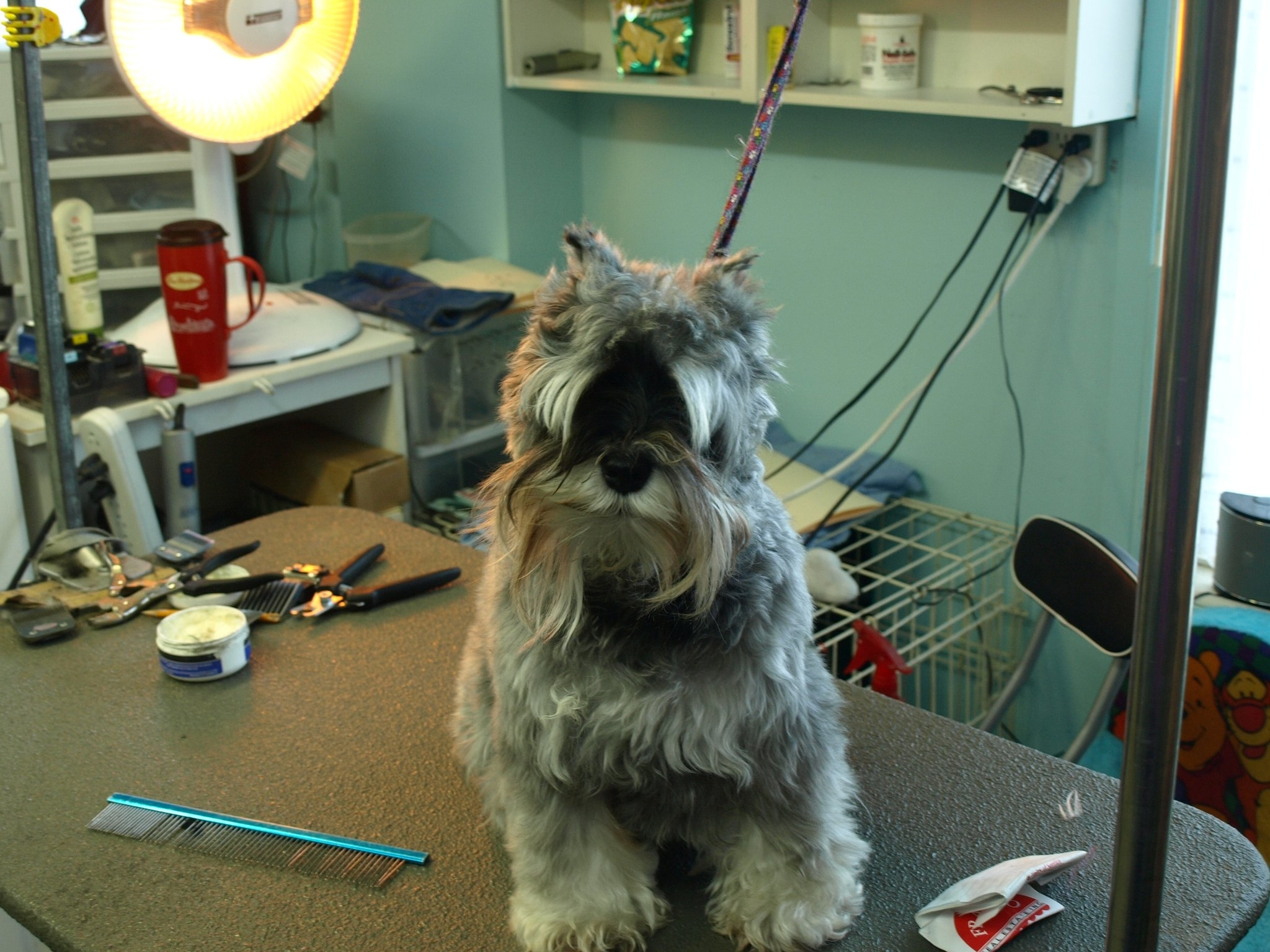 Soft Touch Dog Grooming in Orangeville: Before