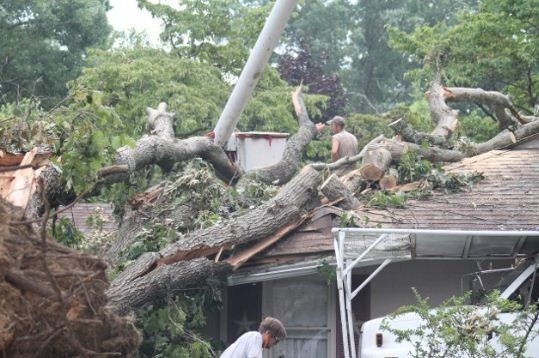 Sprouse's Tree Service LLC image 0