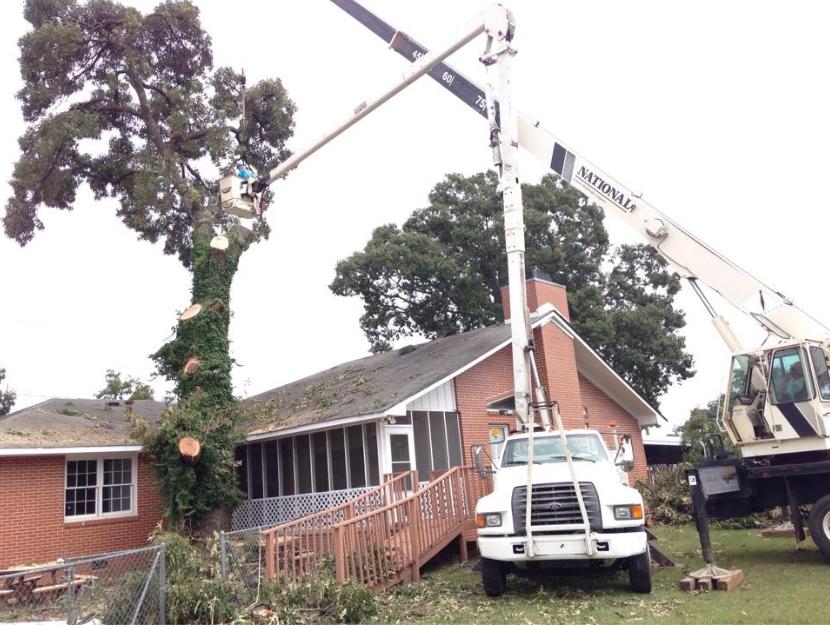 Allen's Tree Service image 7