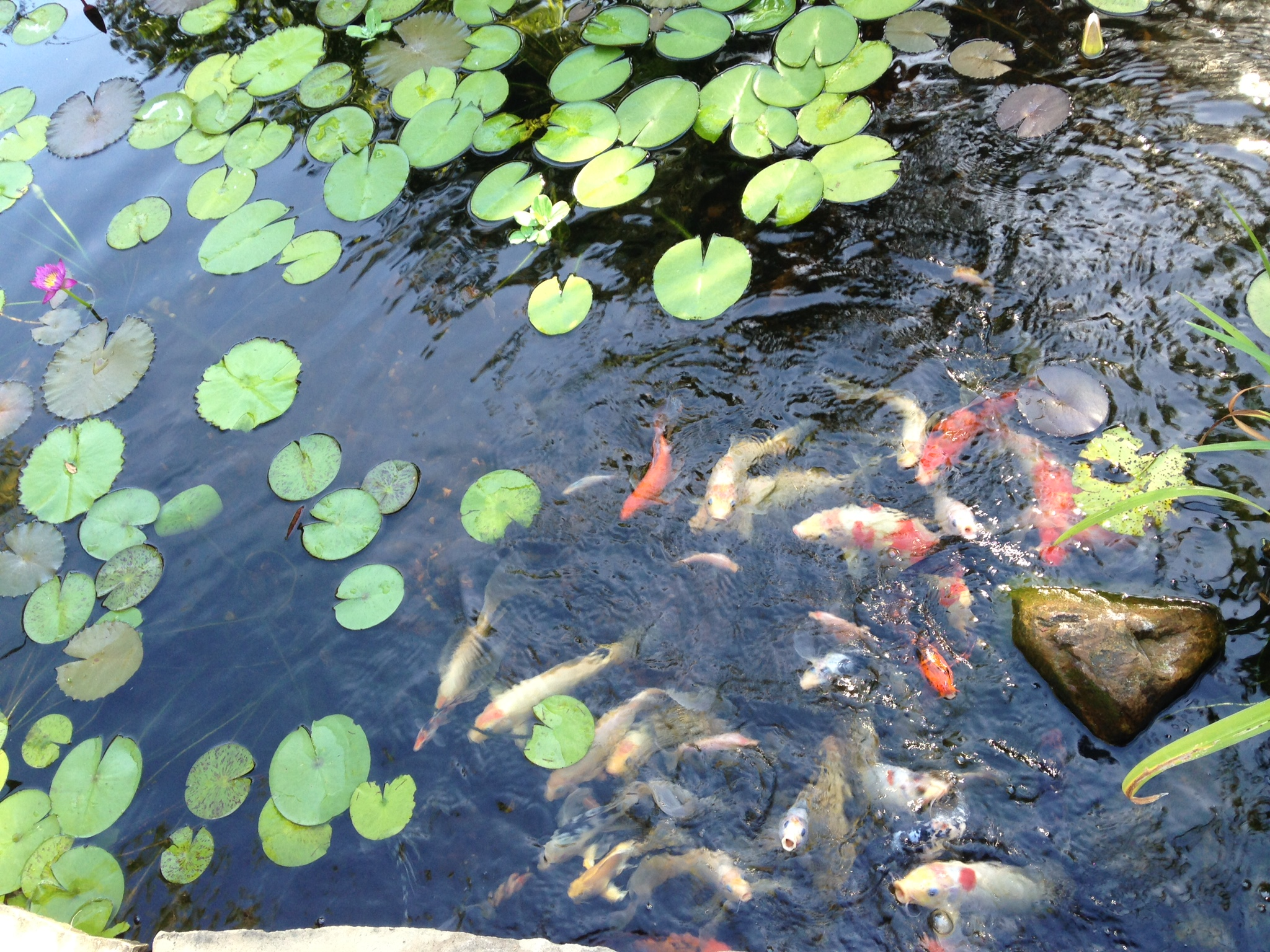 Louisiana Pond Management Coupons Near Me In Baton Rouge
