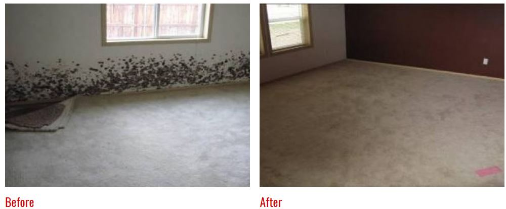 Before and After Photos: Mold damage