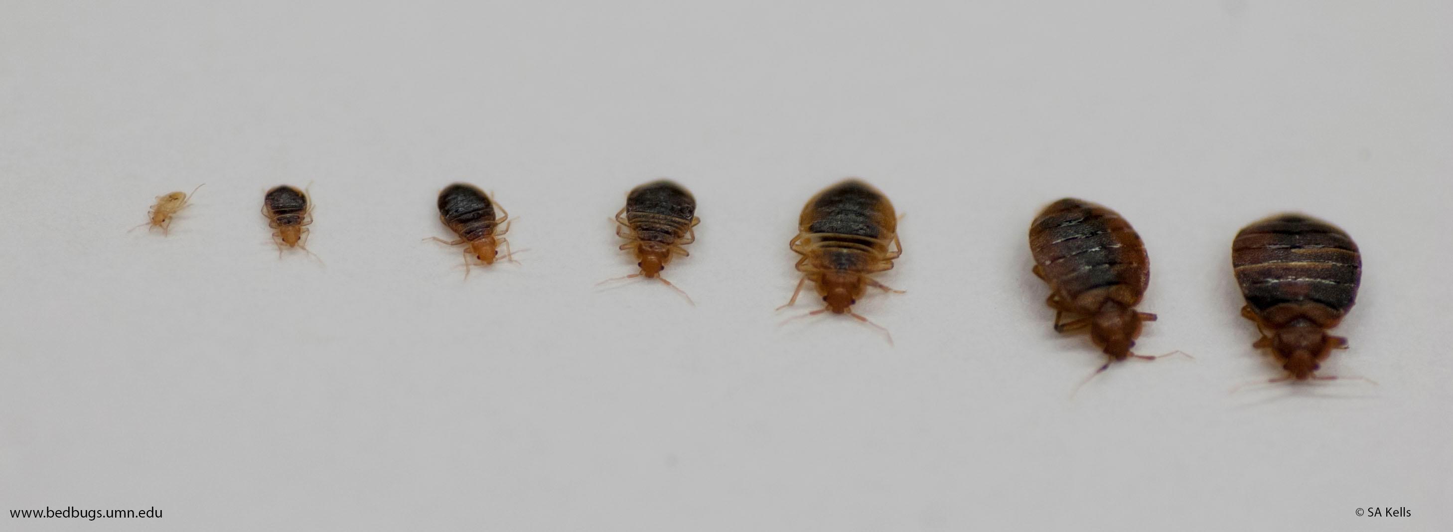 MNR Pest Solutions, Inc. image 3