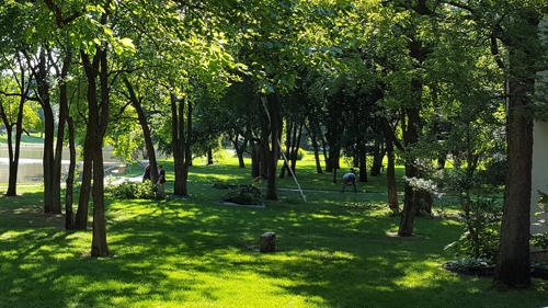Complete Tree Care & Landscaping image 2