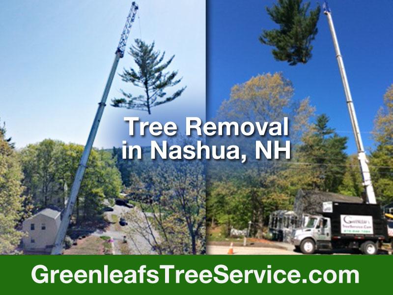 Greenleaf's Tree Service image 6