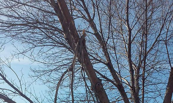Cutting Edge Tree Services image 5