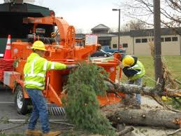New York Long Island Tree Service image 0