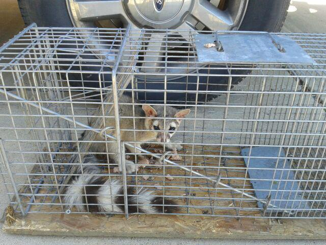 A All Animal Control image 5