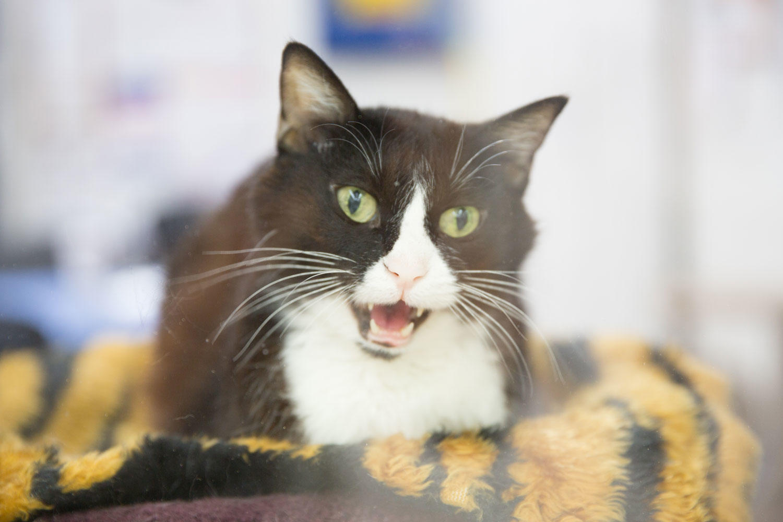 Encanto Pet Clinic image 6