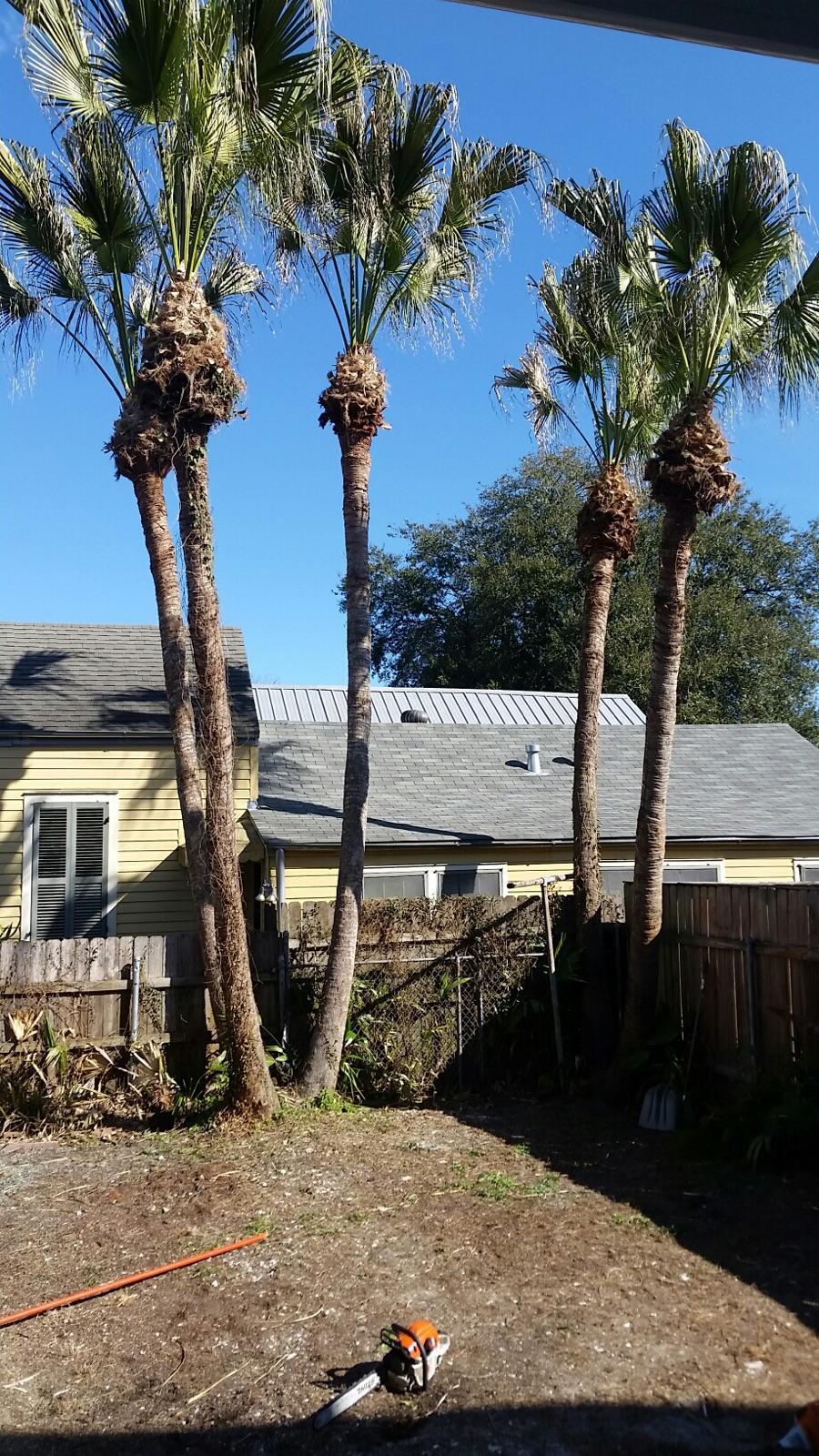 S & L Tree Service & Stump Grinding image 14