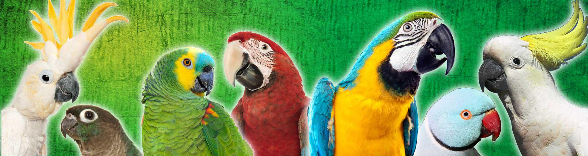 Macaws and Parrots Store image 0