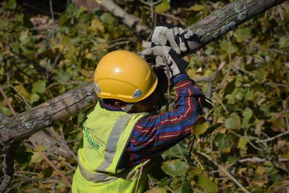 Rivas Tree Service image 6