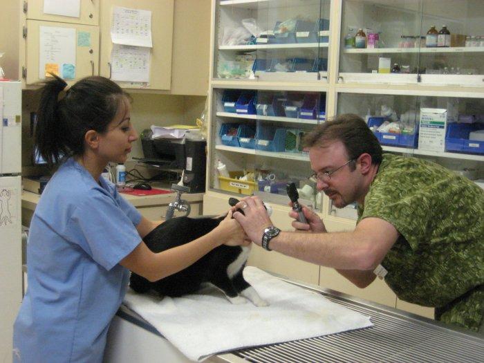 VCA Parkwood Animal Hospital image 4