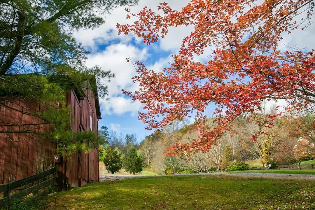 Maple Lane Farm image 8