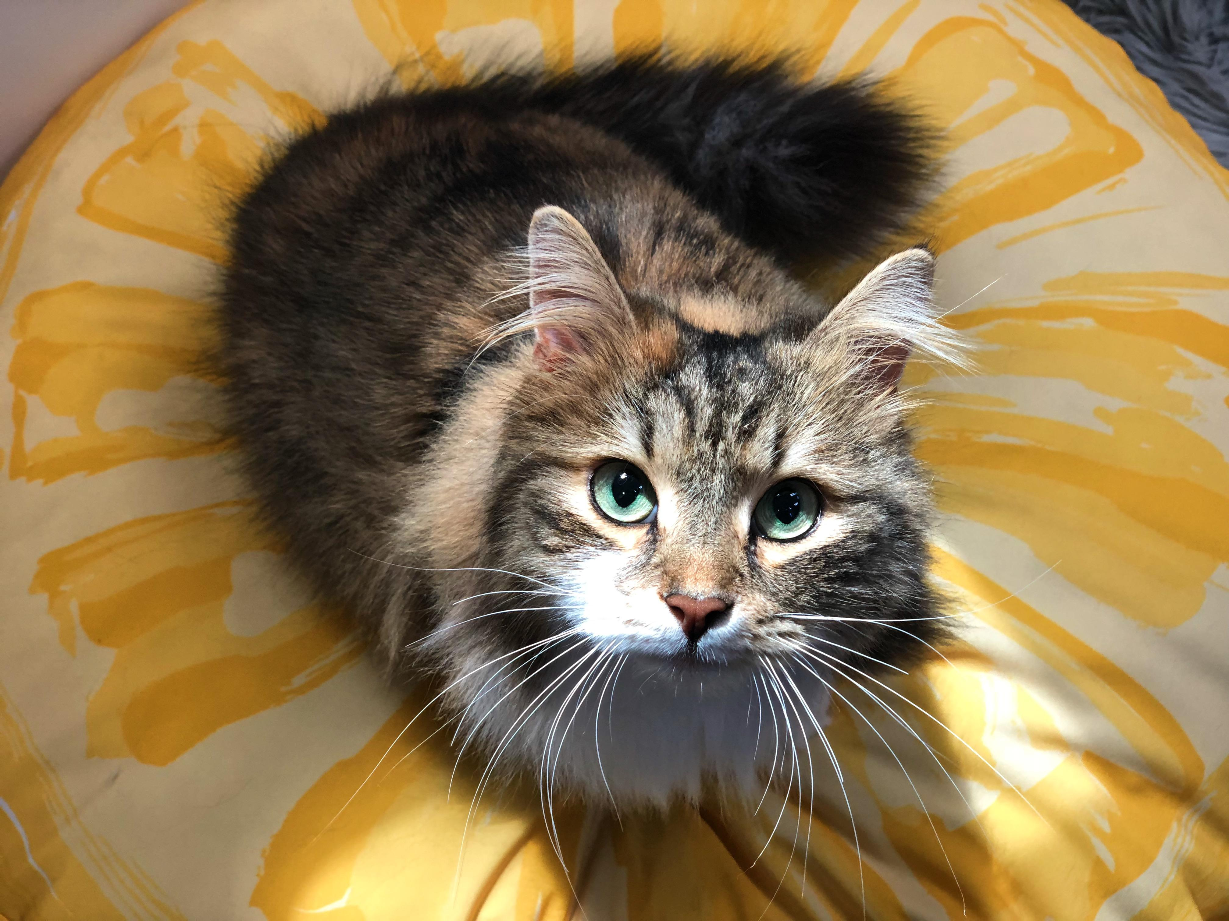 Lowcountry Feline Spa image 2