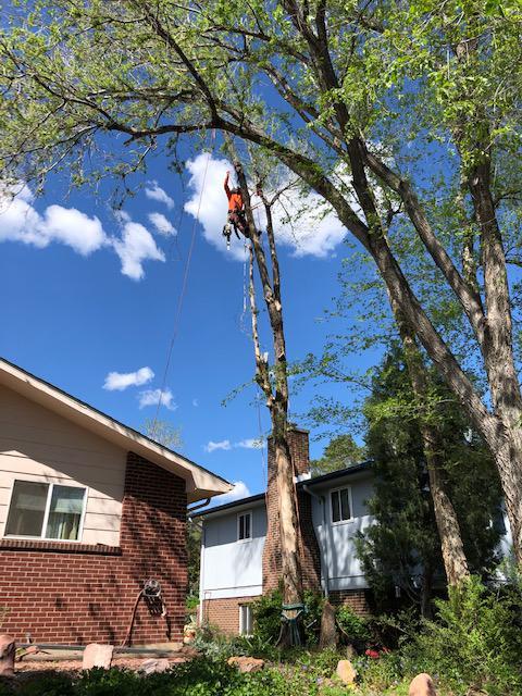 Western Cut Tree Care image 2