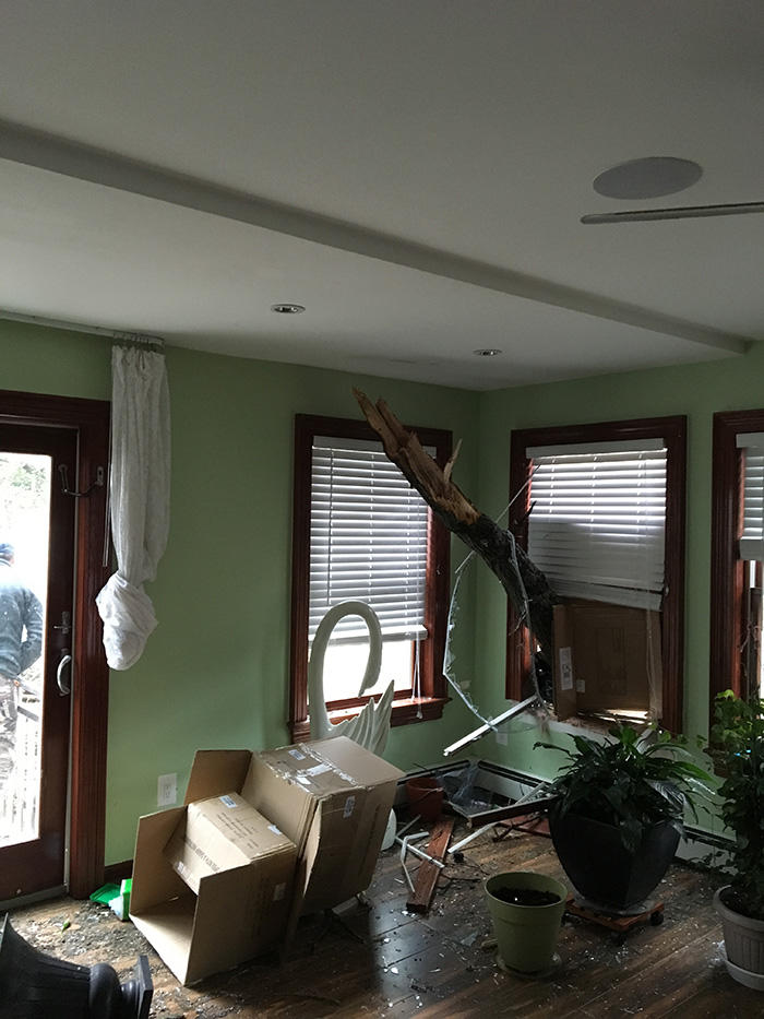 Kev's Landscaping & Tree Service image 3