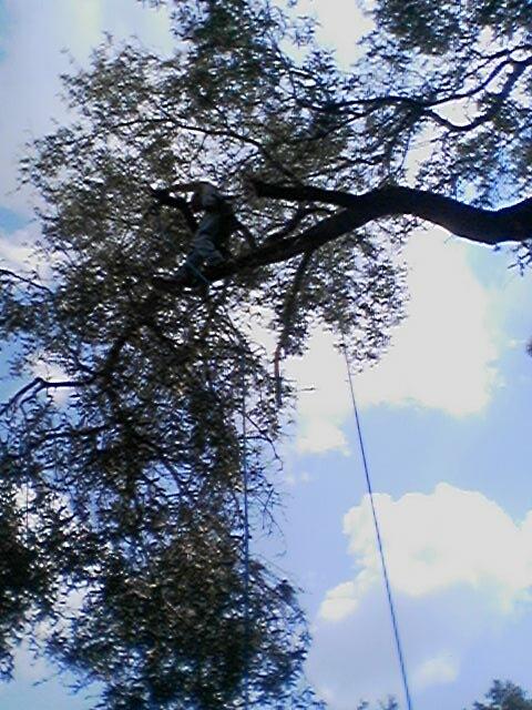 Karney Tree Service image 4