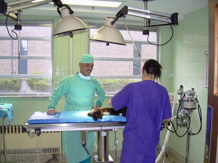 Foster Animal Hospital image 0