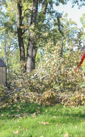 AAA Tree Service