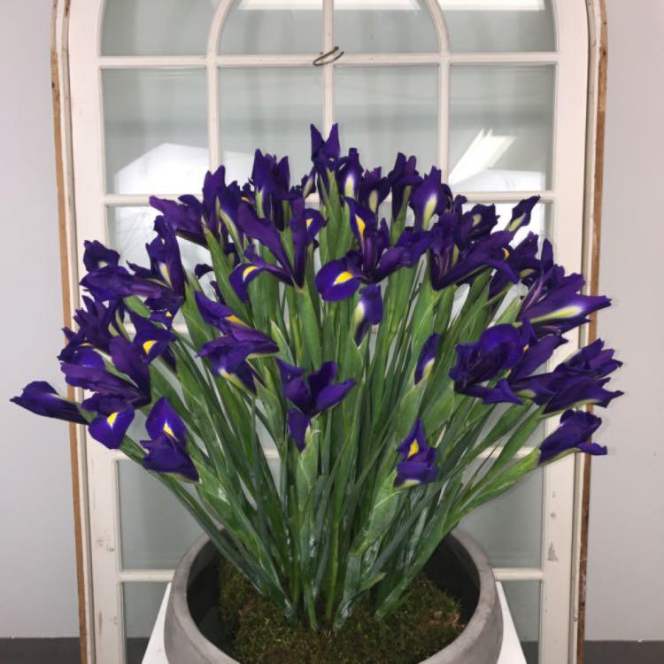Floral Elegance image 15