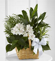 LaPorta's Flowers & Gifts image 6