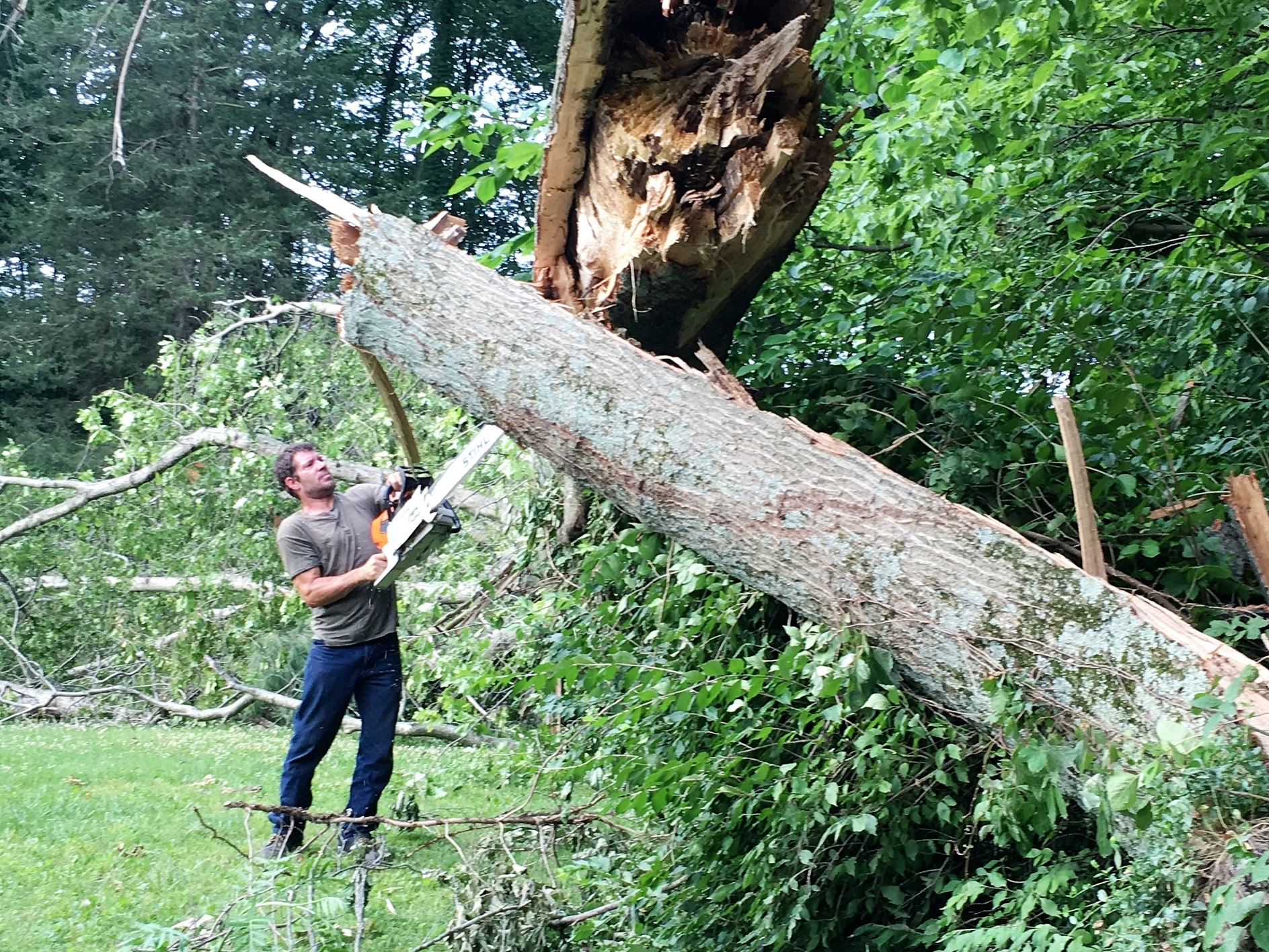 Brown's Tree Service image 5