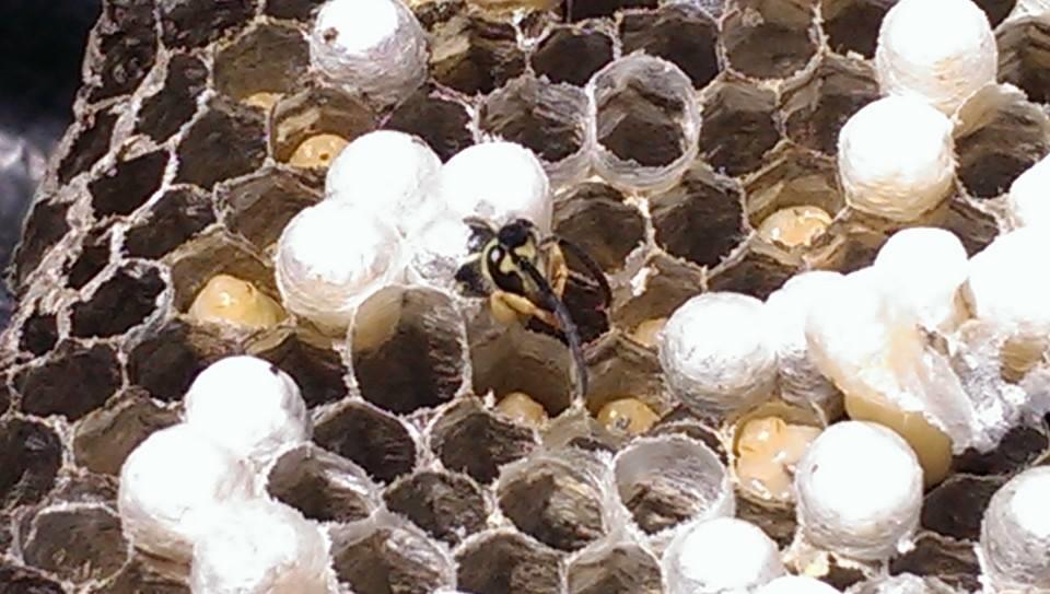 Biz-zz Bee Farms Pest Control image 1