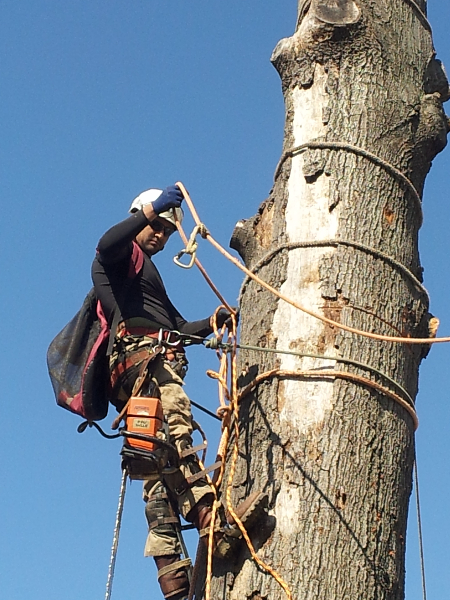 Milton's Tree Care Services image 3