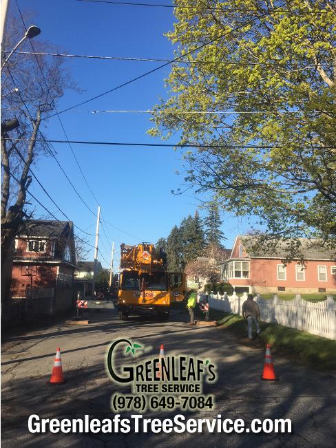 Greenleaf's Tree Service image 30
