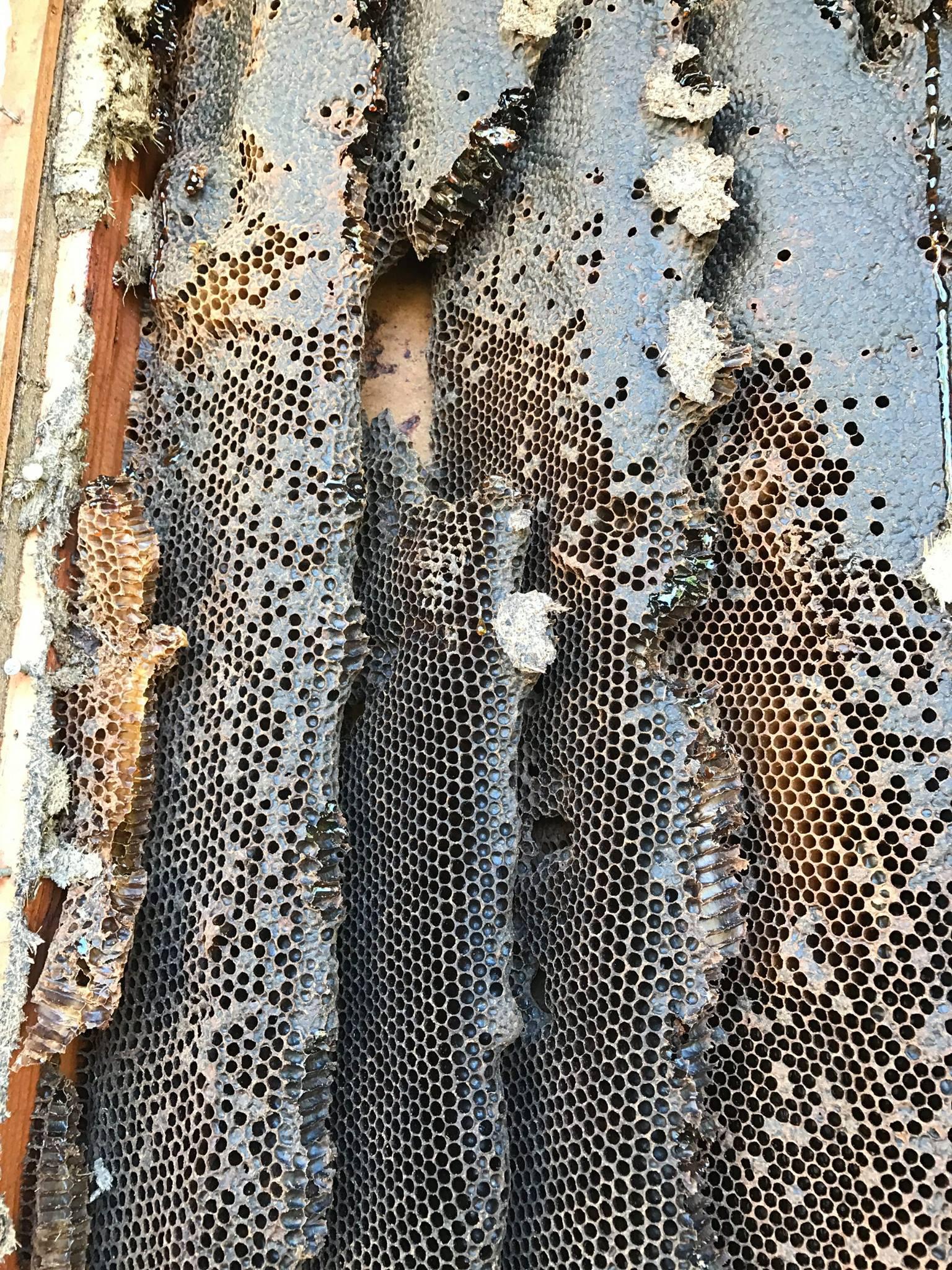 Florida Bee Investigator image 3