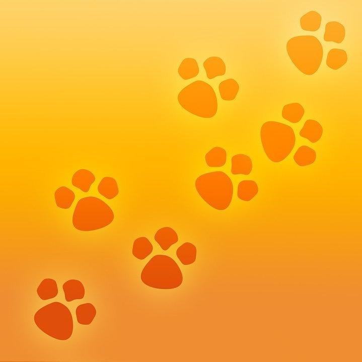 Animal VET OÜ Väikeloomade kliinik (Animal VET OÜ)