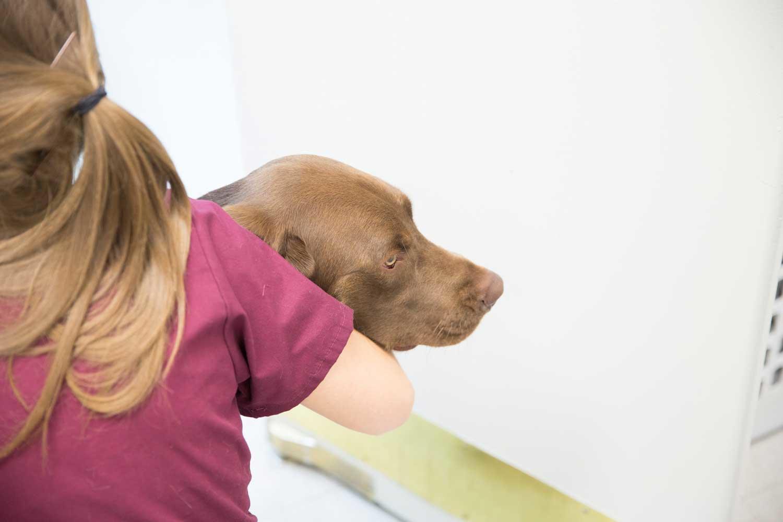 Pima Pet Clinic image 4