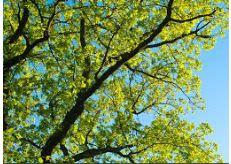 Hendrixson Tree Service image 1