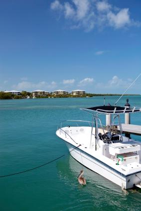 Reef Marine Inc. image 4