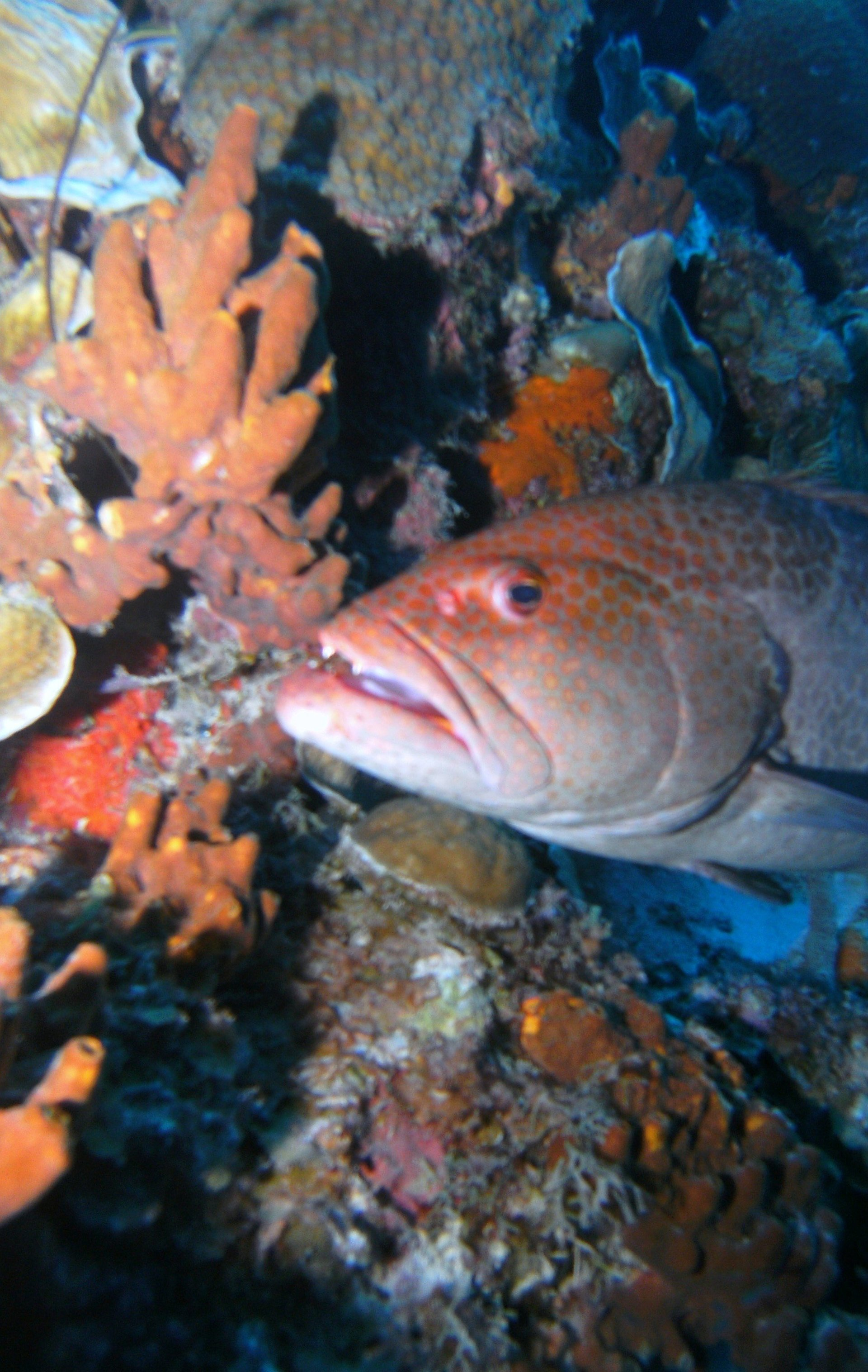 Underwater World Scuba Center image 9