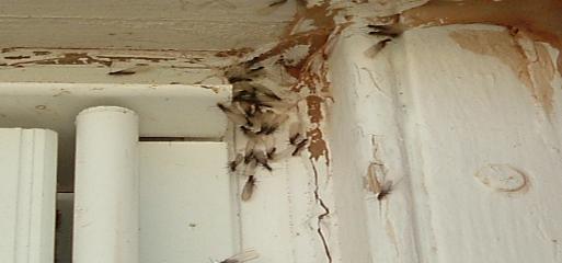Western Pest Control image 6