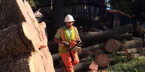 Frady Tree Care image 0